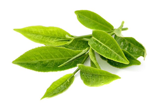 Cách trị hôi miệng bằng lá trà xanh