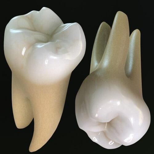 Răng hàm có mấy chân? – Chuyên gia nha khoa giải đáp 2