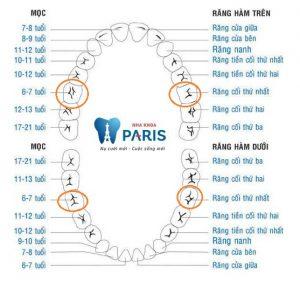 Răng cấm có thay lại không sau khi mọc 1 lần? 1